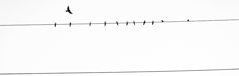 birds-on-a-wire-black-and-white-header